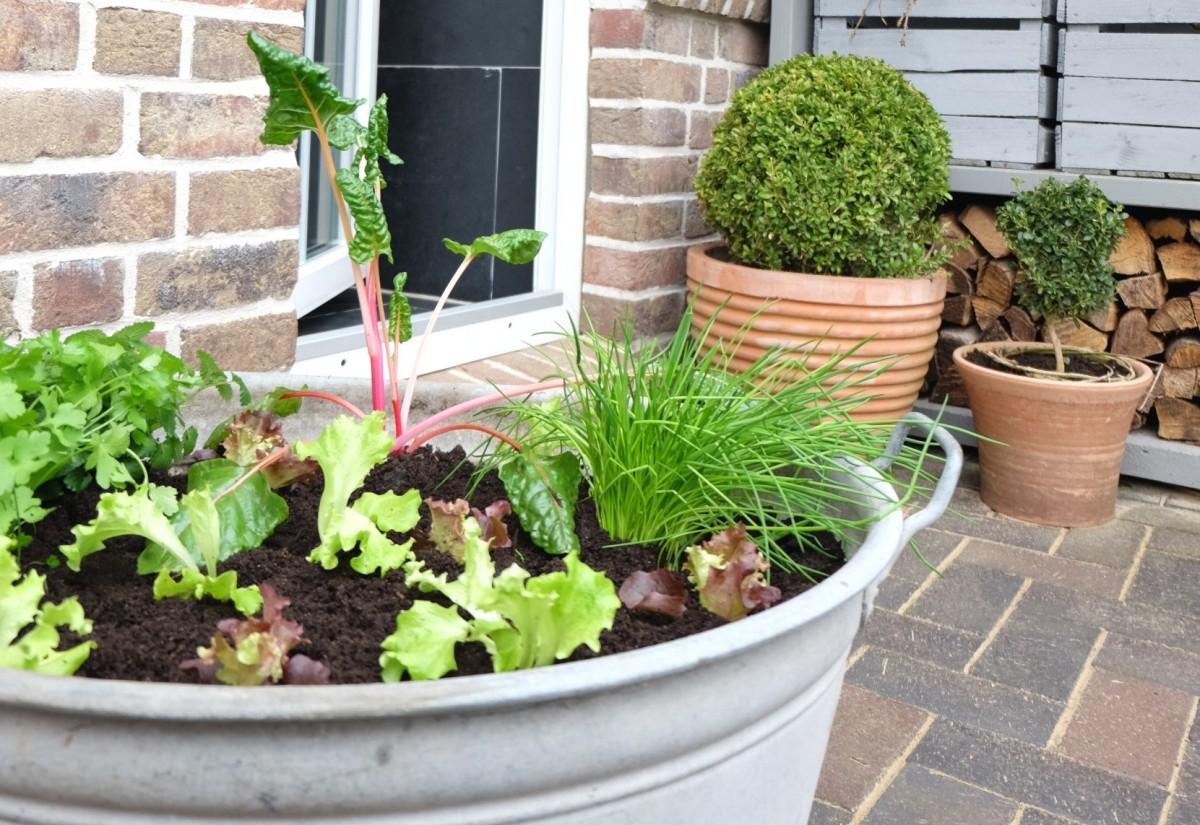 Gemüsetonne - ein Gemüsebeet für den Balkon oder die Terrasse