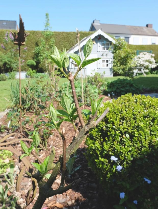 Gartentipps Frühling 20