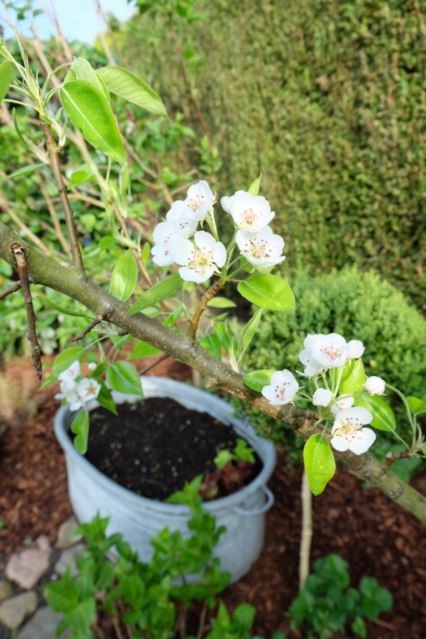 Gartentipps Frühling 6