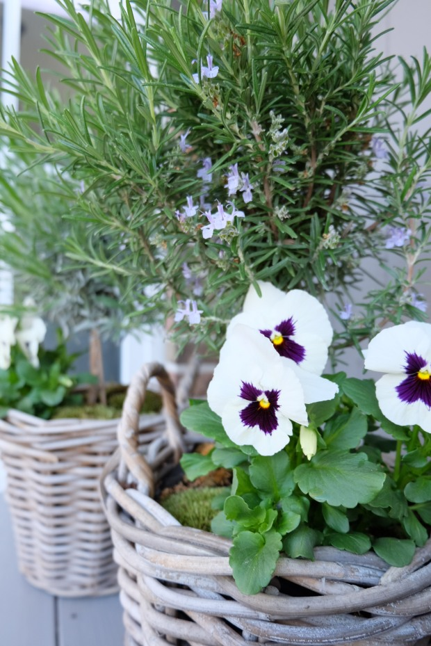 Gartentipps Frühling 7