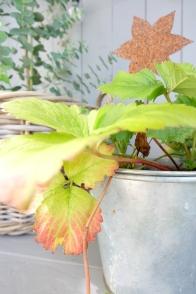 Herbst Garten 15