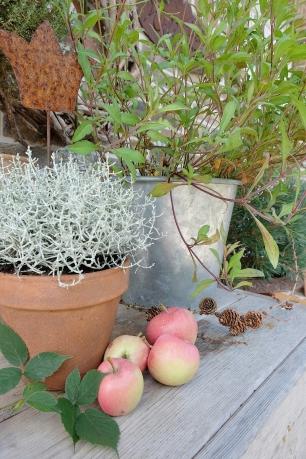Herbst Garten 26