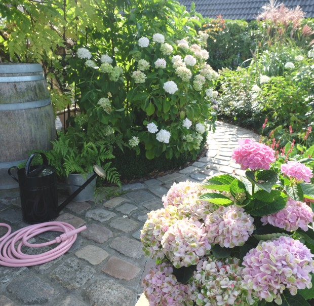 Herbst Garten 29