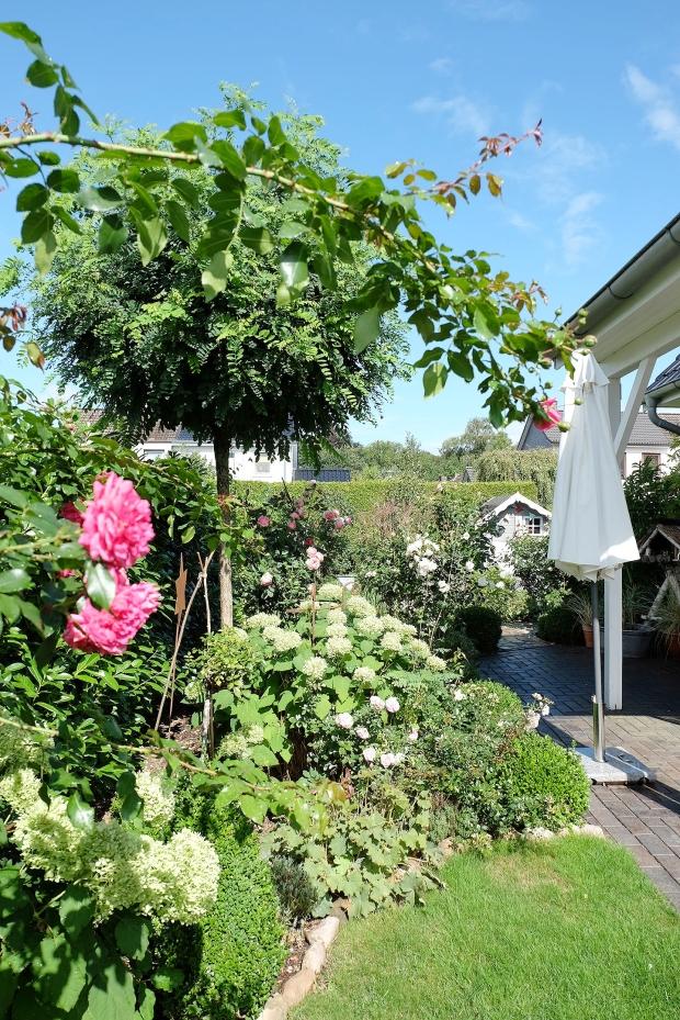 Herbst Garten 5