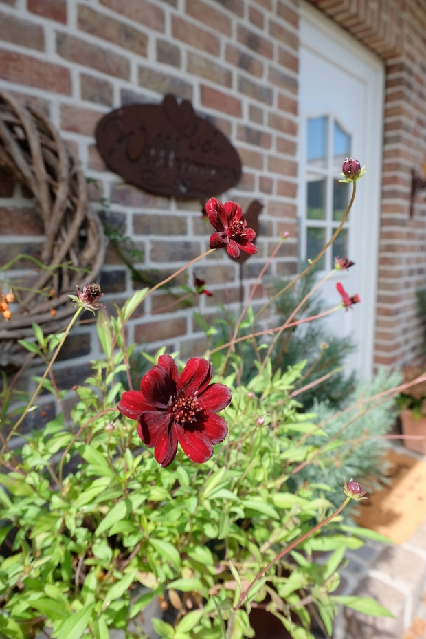 Herbst Garten 8