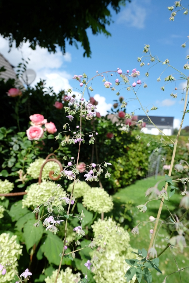Herbst Garten 9