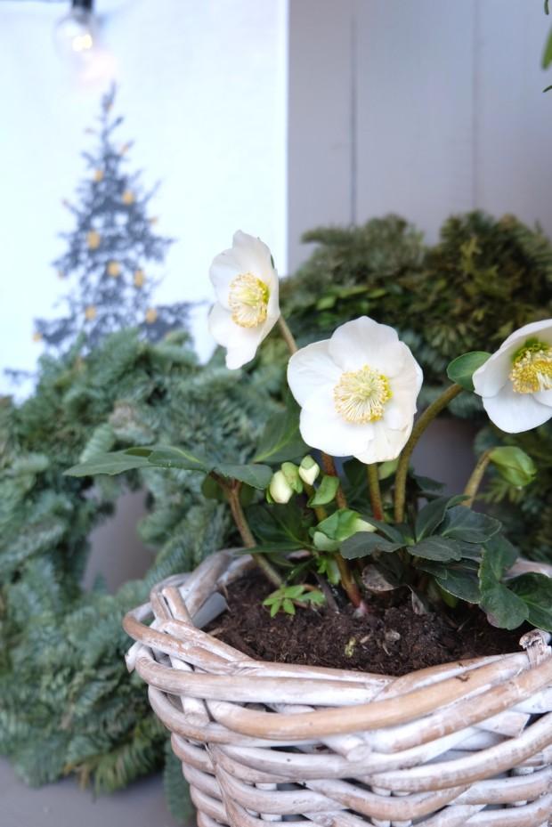 Vogelhäuschen DIY Weihnachten Geschenk 4